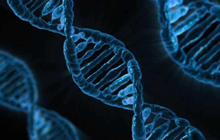 Pela primeira vez na história, cientistas estão se preparando para realizar edição genética dentro de um organismo humano vivo. A terapia experimental tem como objetivo curar permanentemente uma …