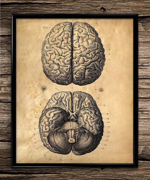Vintage Brain Anatomy | Vintage Print | Anatomy Prints | Home Office Decor | Printable Wall Art | Vintage Wall Art | 8x10 | Instant Download