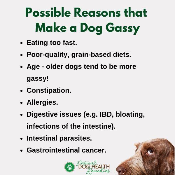 Pin On Dog Health Training Info