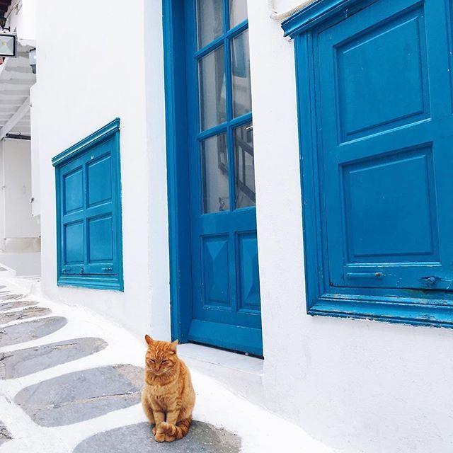 Mykonos via @topmykonosphotos #mykonos #greece