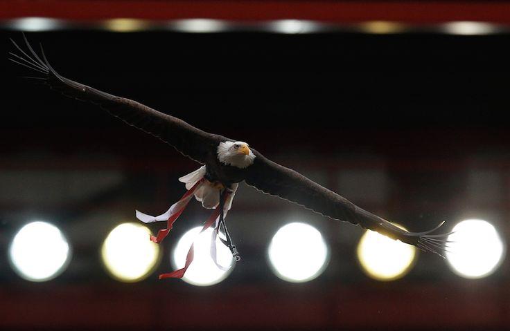 IlPost - Un'aquila, mascotte della squadra di calcio del Benfica, sorvola il campo alla fine della partita di calcio del campionato portoghese vinta dal Benfica 2-0 contro l'Olhanense, domenica 20 aprile 2014. Il Benfica ha vinto lo scudetto. (AP Photo/Armando Franca) - Un'aquila, mascotte della squadra di calcio del Benfica, sorvola il campo alla fine della partita di calcio del campionato portoghese vinta dal Benfica 2-0 contro l'Olhanense, domenica 20 aprile 2014. Il Benfica ha vinto lo…