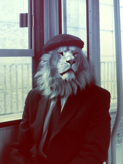 a leonine mask.. an absolutely fool proof way to roam un recognized..