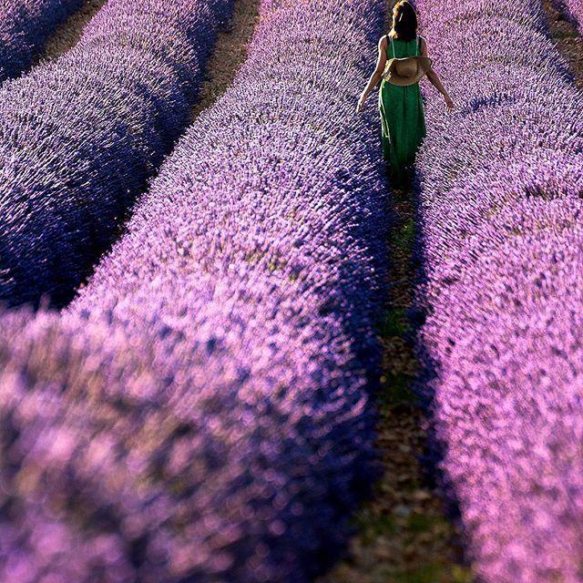 🌎Лавандовое поле | Валенсоль | Франция.🇫🇷  📝Чистейший воздух, аромат лаванды, бескрайние лиловые поля, которые, в зависимости от погоды и периода цветения, приобретают цвета от серо-лиловых до сине-фиолетовых… разве не сказка?😍 Во время цветения лаванды🌸 земля отражает синеву высокого неба так, что создается впечатление что ты ногами ходишь по фиолетово-синим облакам.⛅  Лавандовые поля распростерты между живописными деревушками🏡 и усеянных цветами ферм. Настоящие сельские пейзажи на…