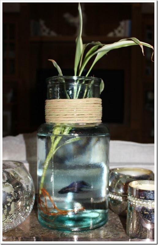 Beta Fish / Tropical plant