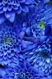 """Képtalálat a következőre: """"virágok kép"""""""
