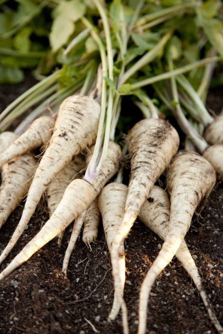 Le panais | Légumes de saison octobre, Légumes de saison ...