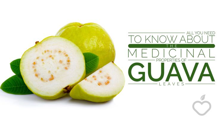 All You Need To Know About The Medicinal Properties of Guava Leaves - Positive Health Wellness
