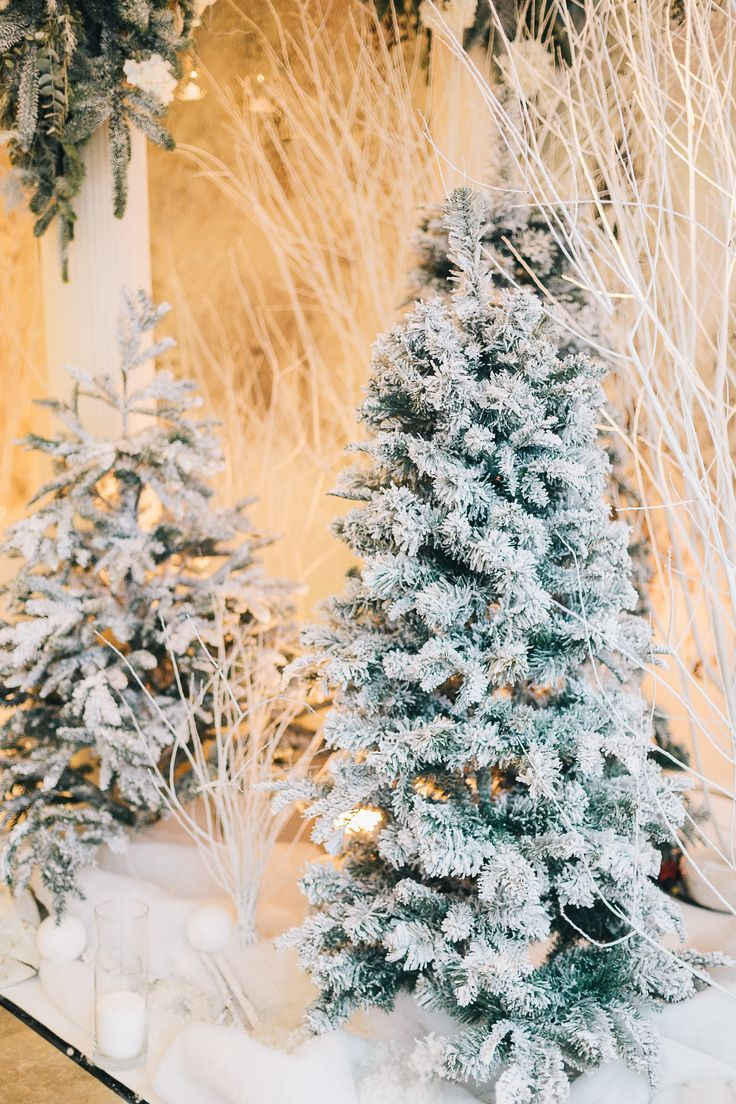wedding decor, wedding wood, winter decor, winter ,wedding,  fir, волшебный лес, свадьба, церемония, ели, оформление свадьбы