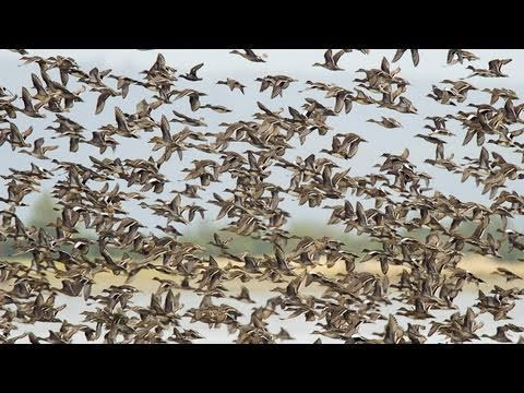 John Fitzpatrick, Director of the Cornell Lab of Ornithology, takes us on a bird-tour of the Mississippi River Delta.