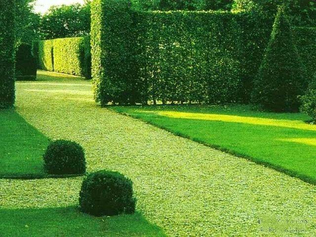 декоративный зеленый газон