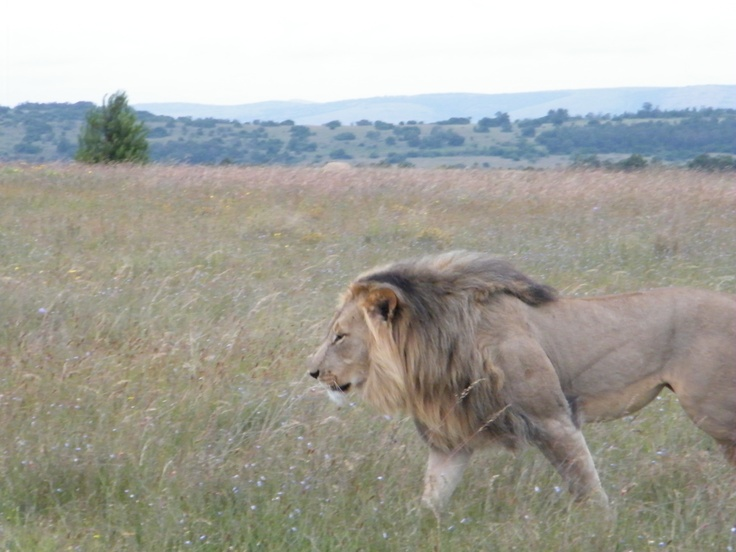 Duma at Lalibela Reserve in South Africa