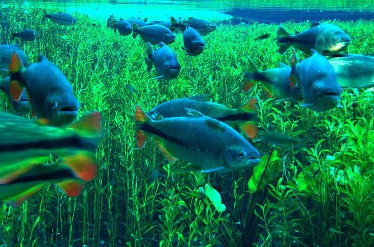 Bonito - Peixes 01