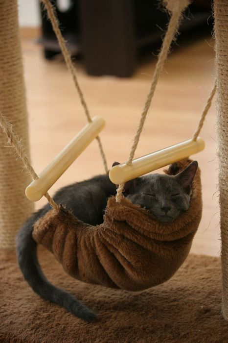 Kitty Hammock. - How cute! I would need a little swing-set with three...and Diva/Queen cat would be in the middle where she would think shes special, but really it would be just to keep Emo/Assassin cat from eating my Schnauzer, who would be on the