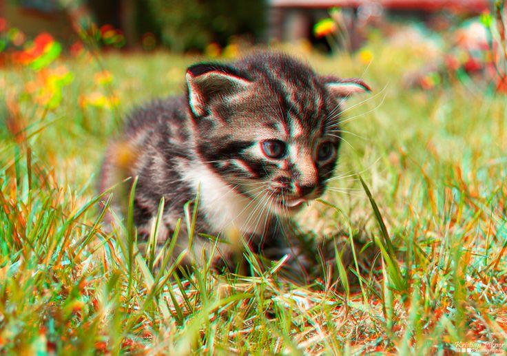 Kitten 3D Anaglyph photo (Red-Cyan)