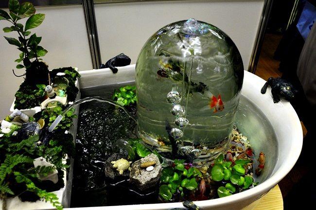 $金魚日和 -水槽レイアウト 観賞魚フェア