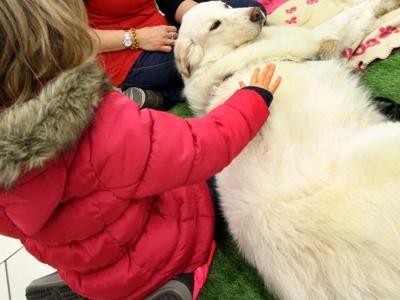 Pet therapy, quattro zampe per i bimbi in corsia :http://www.qualazampa.news/2016/05/10/pet-therapy-quattro-zampe-per-i-bimbi-in-corsia/