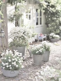 Cottage Gardens in Crimson, White and Blue