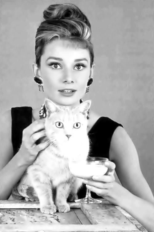 holly & cat # Breakfast At Tiffany´s-pin it by carden