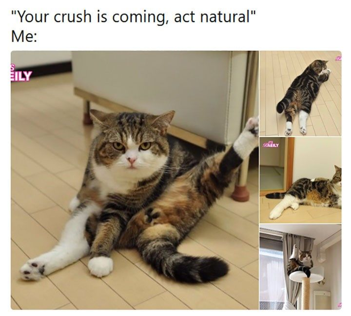 13 Times Animals Had To Deal With That Awkward Moment They Saw Their Crush (Memes)