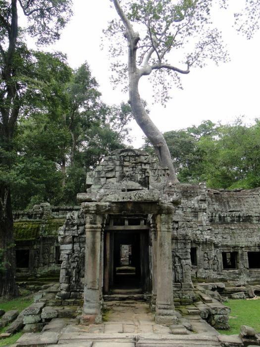 Ta Prohm Temple - Old Brahama - Tomb Raider