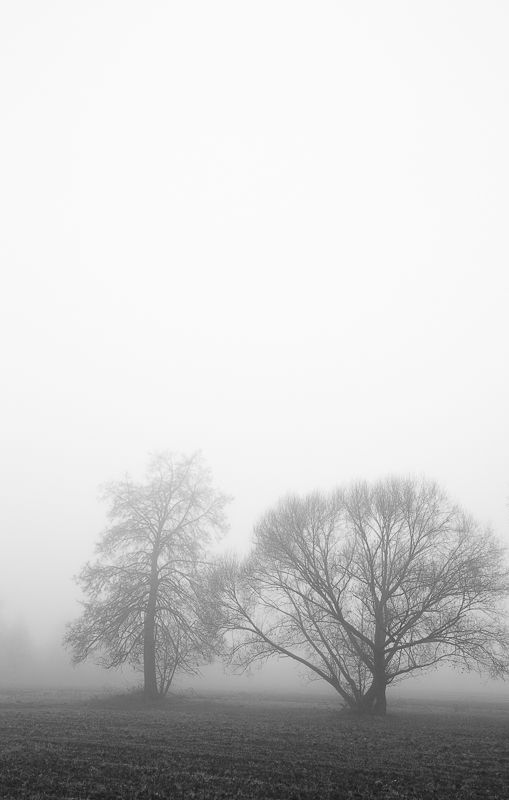 #photo #landscape #BW morning fog