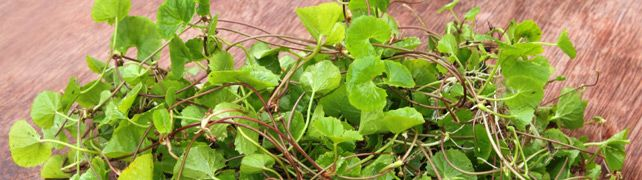 Herbal and natural treatments for ADHD