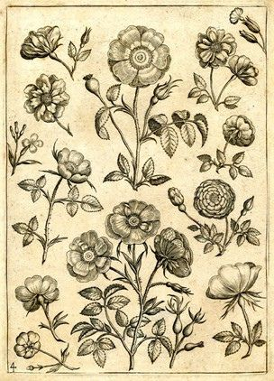 from the Florilegium of Adriaen Collaert (found on flickr)