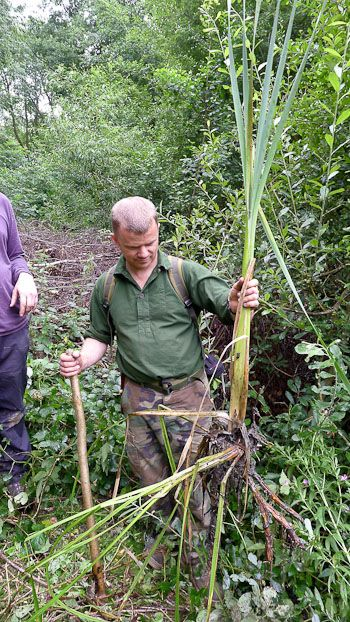 Five Survival Plants Every Forager Should Know by PAUL KIRTLEY   herbology, herbalism, healing plants, herbal medicine