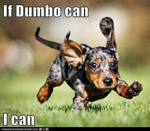 Well I've seen about just about everything when I see a dachshund fly...