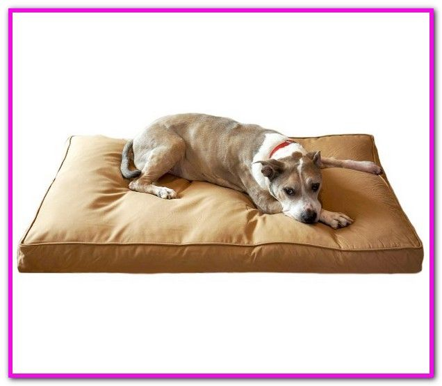Furniture Style Dog Beds Find An Amazing Selection Of At Seniorpetproducts