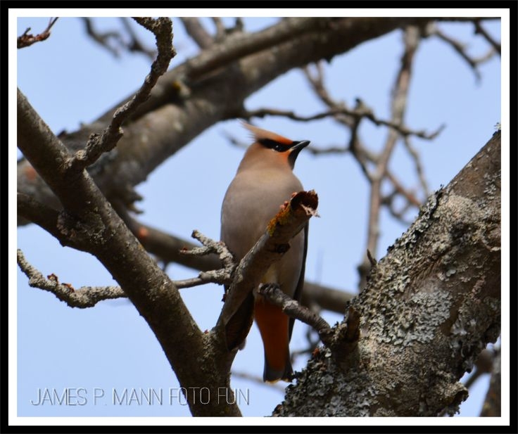 Often I see Cedar Waxwings and robins show up in our yard in March but to me it's saying spring is very close.