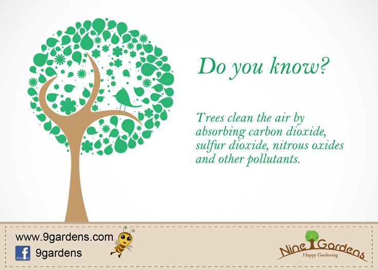 Amazing Fact About Nature Amazing Plant Facts