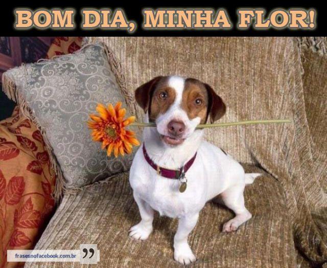 Frases para Facebook Bom dia, minha flor!