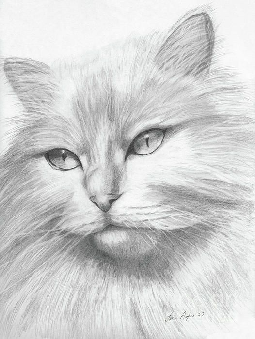 Cat Realistic Coloring Page