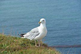 Helgoland, Urlaub, Nordsee, Steine