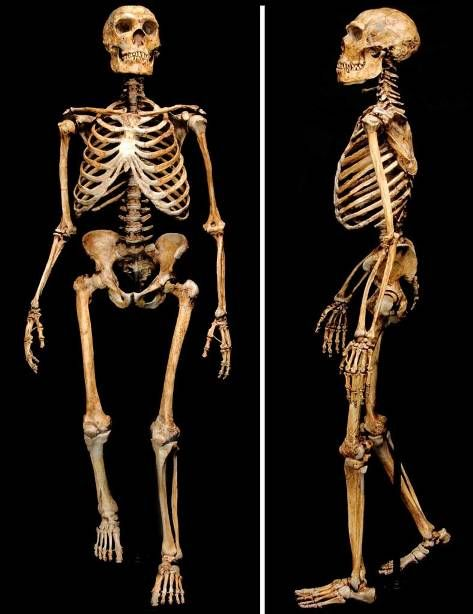 Early Humans Evolution neanderthal fossil - G...