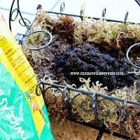 With a wire basket and a few cuttings from around the yard this succul…