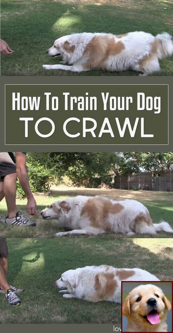 House Training A Puppy For Dummies And Dog Training Courses In