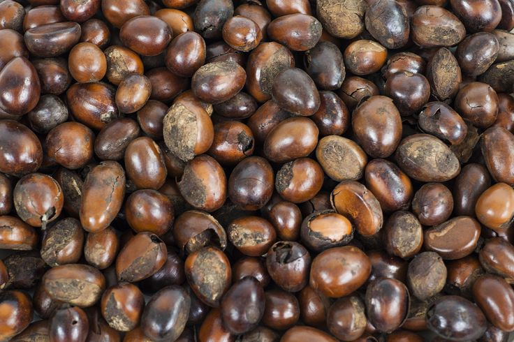 SHEA THE LOVE.  The main ingredient in Naturally Tribal Skincare products is an amazing little nut, from Africa, called a 'Shea'.  Shea is naturally brilliant for the skin, as it has many benefits.....