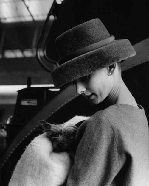 Audrey Hepburn and Mr Famous in Funny Face, 1957: Hats, Fashion, Audrey Hepburn, Audreyhepburn, Funny Faces, Dog, People