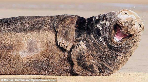 Smiling Seals