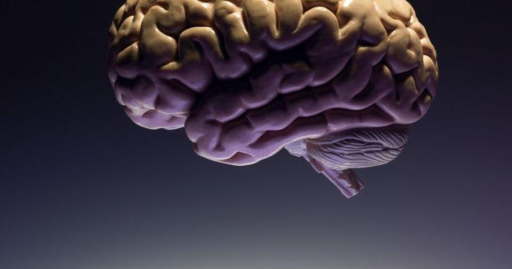 Que parte do cérebro afeta o aprendizado?. Muitas áreas do cérebro estão envolvidas em processos de aprendizagem, algumas envolvidas em partes relacionadas do aprendizado e outras controlando partes específicas desse processo. Cada área do cérebro se desenvolve ao longo de um período de tempo, que varia entre dois e três anos até oito anos. Pesquisas estão constantemente sendo feitas para ...