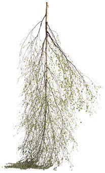 Wallsticker Upside down tree fra Bolia. Om denne nettbutikken: http://nettbutikknytt.no/bolia-com/