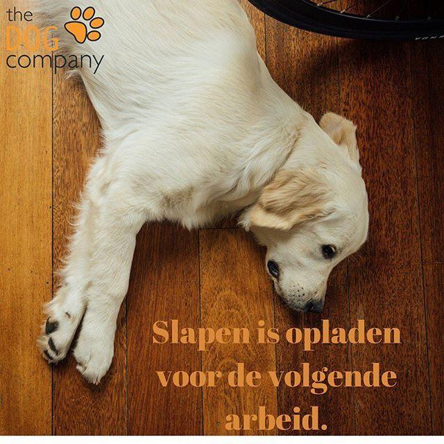 Dag van de Arbeid! Soms vergeten we dat onze honden ook genoeg rust moeten hebben om goed te functioneren in onze maatschappij. Hoe slaapt jouw hond?  #dagvandearbeid #hondenschool #honden #thedogcompany #hondentraining #hondenvaninstagram