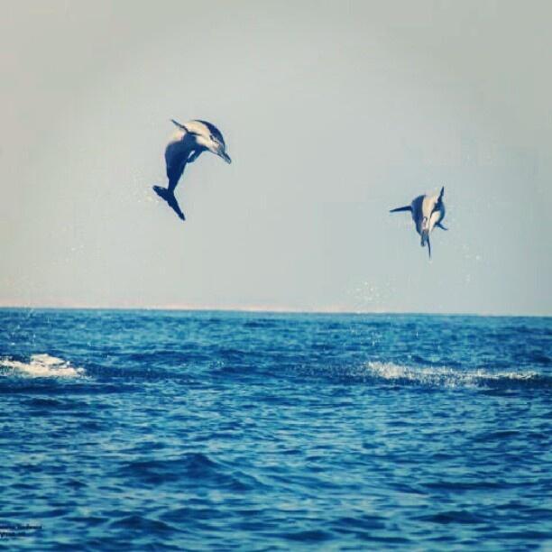 الدلافين في مرباط، صلالة، سلطنة عمان  Wild Dolphins in Mirbat (Salalah), Oman  By @bader_waheed