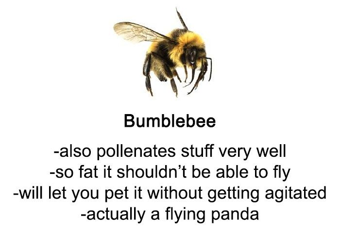 Someone Wrote A Funny Guide About Bees And Wasps And You Might Learn Something New Handige Tips Tips