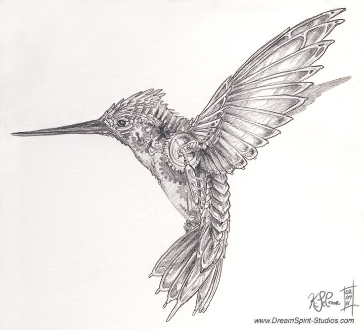 hummingbird drawings | Mechanical Hummingbird Concept by *Dreamspirit on deviantART
