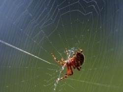 We are all familiar with spiders and their webs. The orb-weaver spider spins a web in a spiral wheel-shaped design often found in gardens, fields and forests.