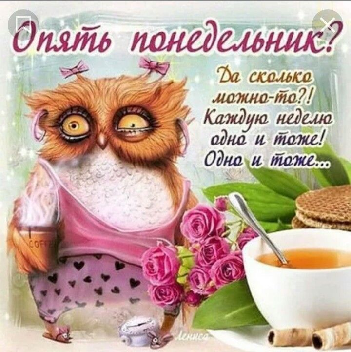 Открытки юмористические с понедельником хорошим