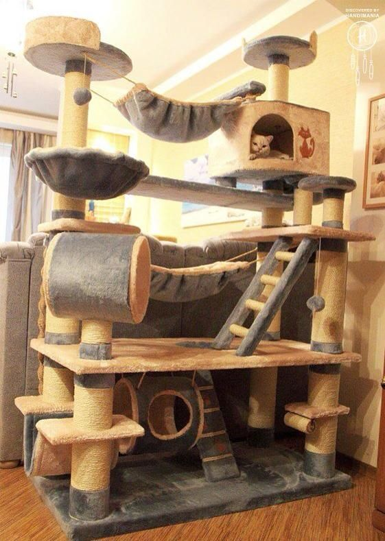 i've seen cat castles five feet shorter than this that cost 200 bucks.... this is one passionate cat lover